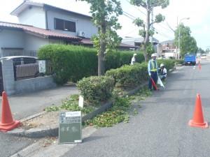 岸和田市内で低木剪定、除草作業、昨年は4人で作業をしていたけれど、今年は6人でしています。2人増えただけで倍近く進んでます。